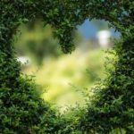Piękny ,a także zadbany zieleniec to zasługa wielu godzin spędzonych  w jego zaciszu w trakcie pielegnacji.